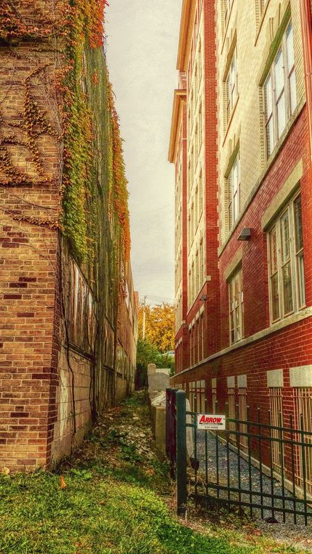 Alleys Old Alleyways Shortcut Urban Architecture Streetphotography Leaves And Vines Sky Check This Out Eye4photography