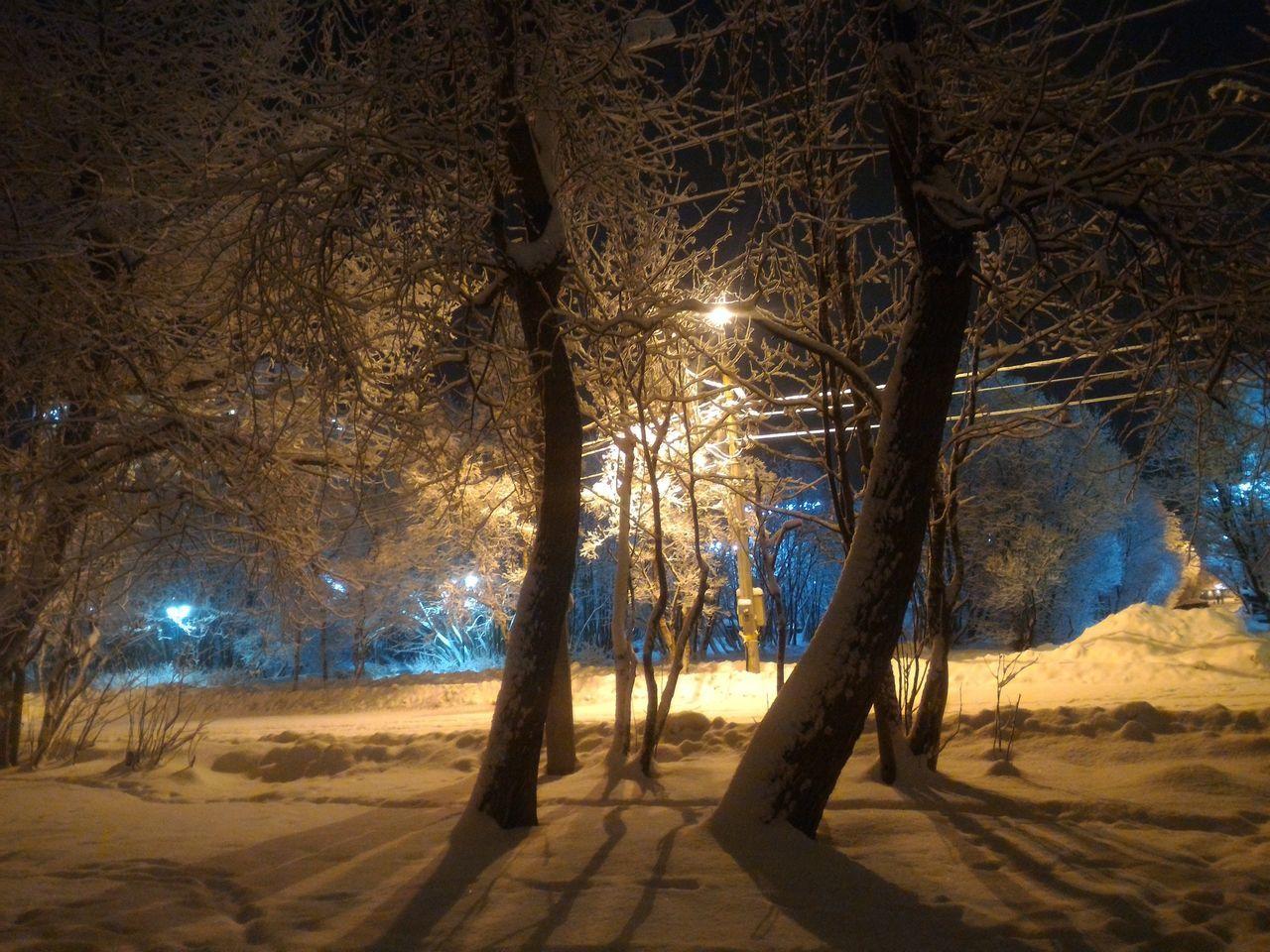 My Year My View Snow Day Illuminated SNOW NIGHT No People Winter Snow Night Light Tree Night Snow Snow ❄ City