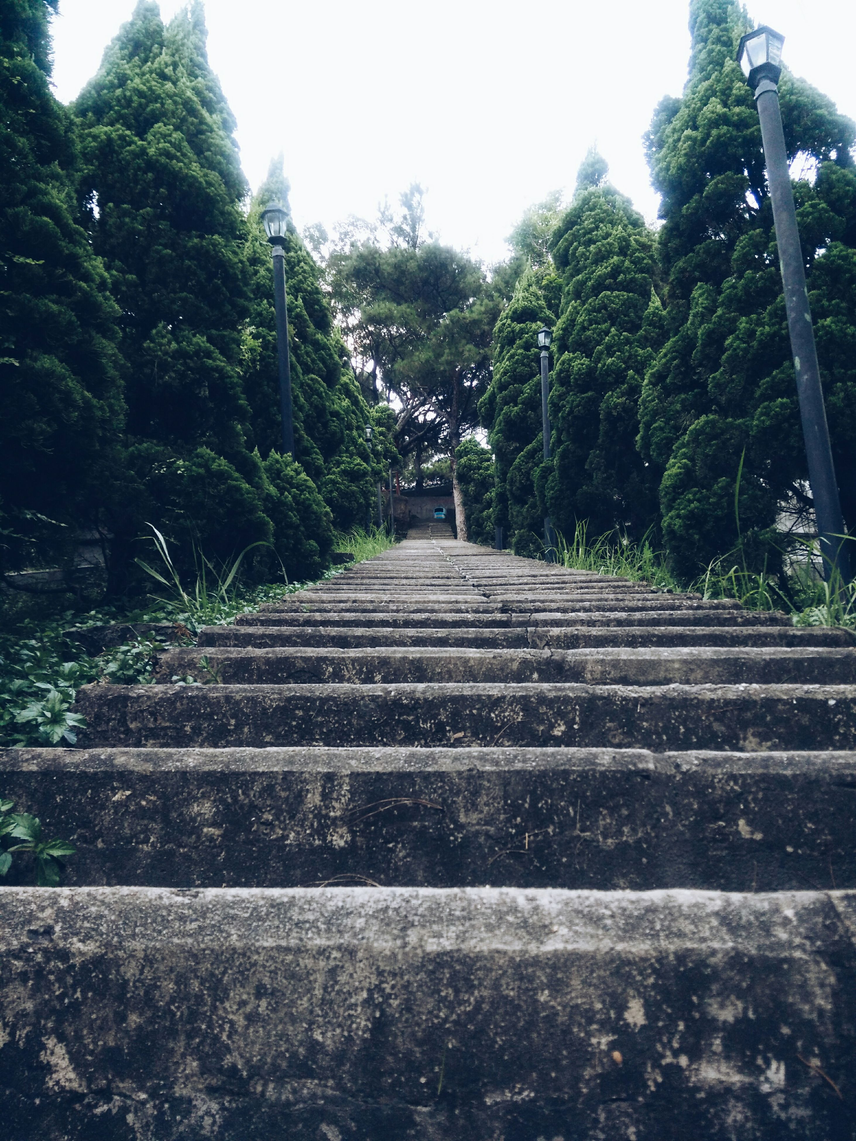 tree, the way forward, steps, clear sky, low angle view, steps and staircases, sky, growth, diminishing perspective, staircase, day, railing, outdoors, nature, tranquility, railroad track, vanishing point, no people, plant, transportation