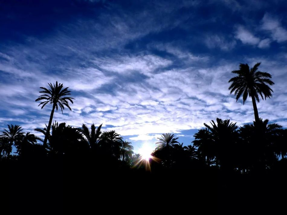 Clouds And Sky Nofilter Thecalmnesswithin Palmeral De Elche