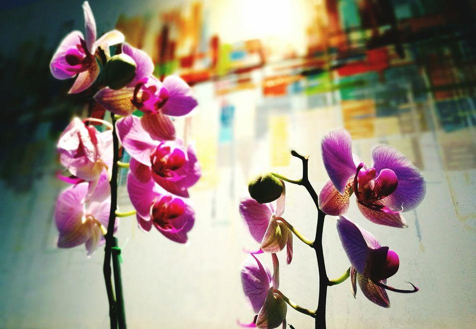 Art Is Everywhere Orchid Costa Rica Pura Vida ✌