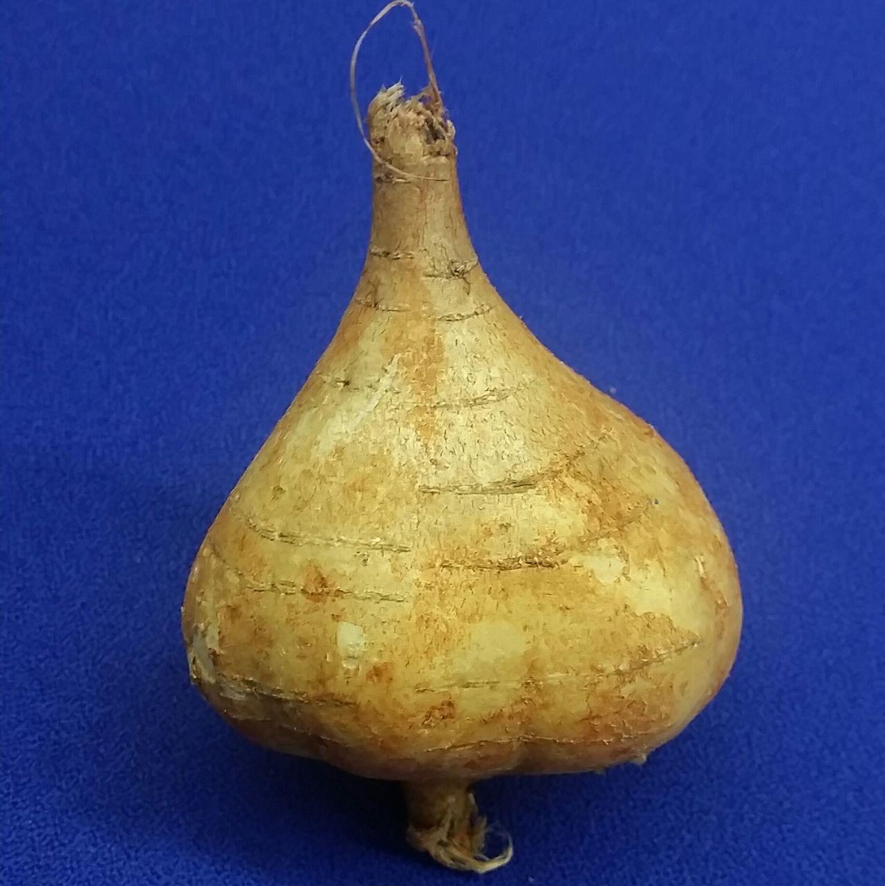 Singkamas Jícama Rootvegetables Turnip