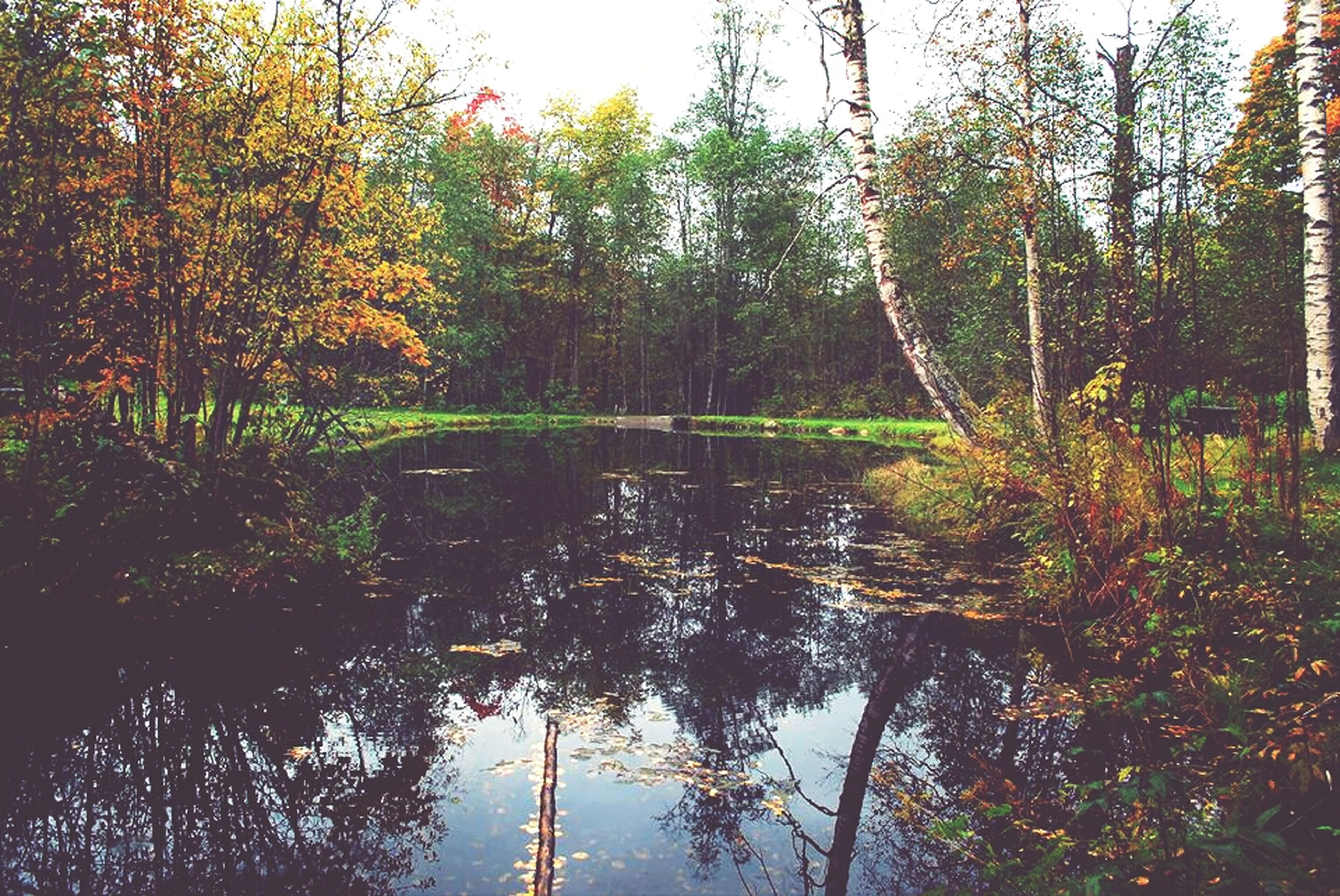 tree, water, tranquility, reflection, tranquil scene, scenics, beauty in nature, lake, nature, growth, forest, branch, idyllic, waterfront, non-urban scene, river, sky, tree trunk, outdoors, autumn