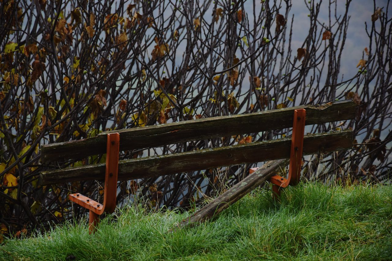 No People Outdoors Nature Day Bench StillLife Tree Loneliness Autumn Colors Foggy Morning Emotions Captured