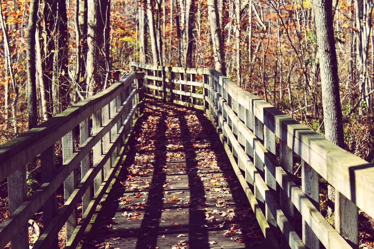 Rondeau Provincial Park First Eyeem Photo Ontario LakeErie Rondeauprovincialpark Fall Beauty Fall Leaves Bridge Ontario In The Fall Ontarioparks