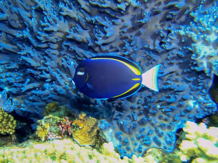 Blue Fish Happy :) Nature_collection Ogasawara Island Tokyo,Japan Underwater Landscape Underwater Photography