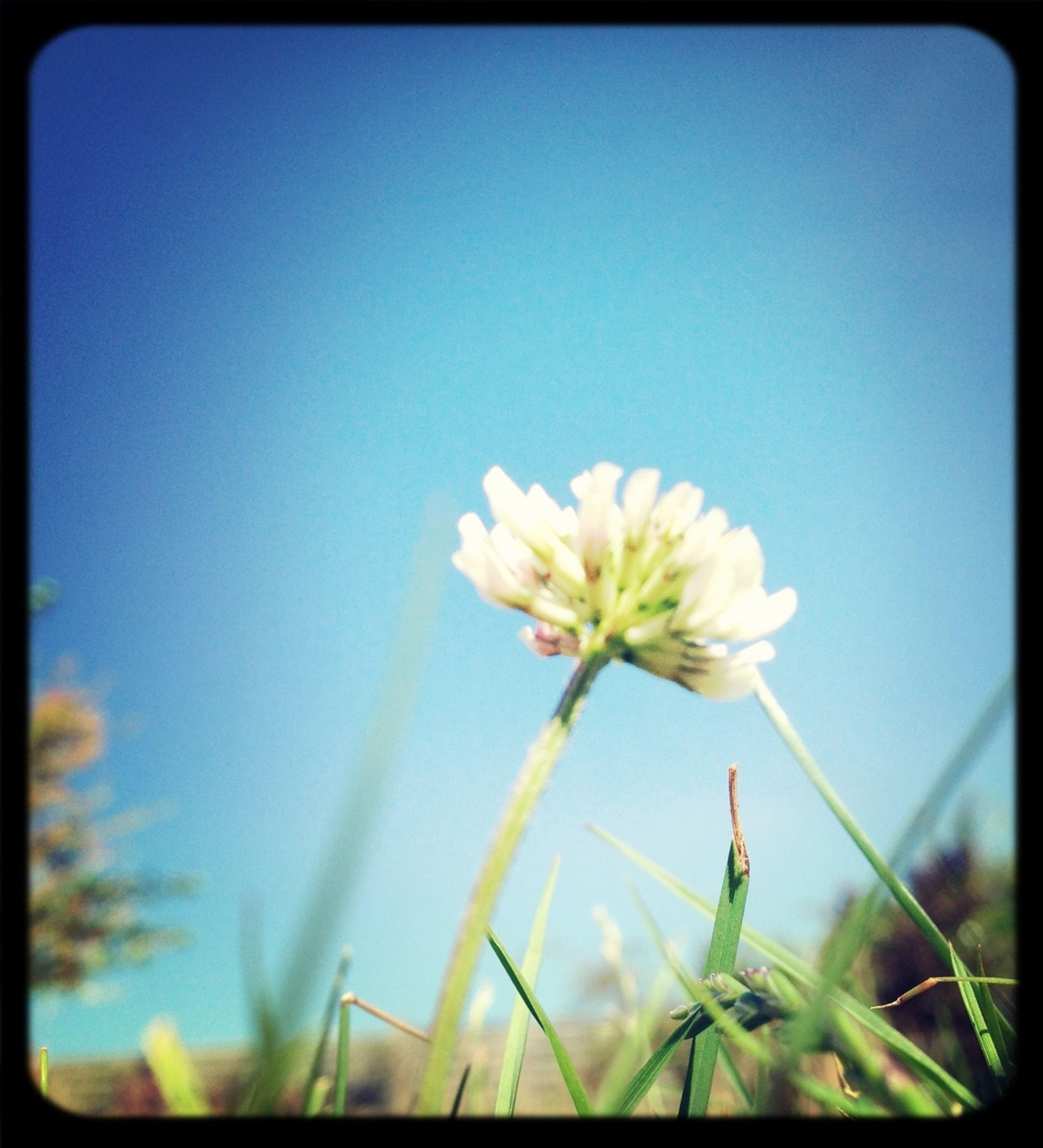 a little flower Flower Blue Sky