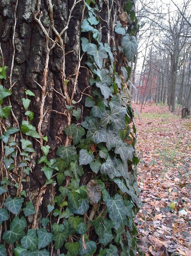 ősz Colours Borostán, Zöld Braun Green Plants Relax Nature Autumn Colours Autumn Outdoors Autumn Leaves