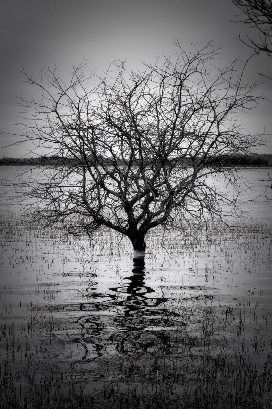 Tree Bare Tree Tranquility Beauty In Nature Reflection Lake Scenics Outdoors Landscape Sky Nikon Blackandwhite