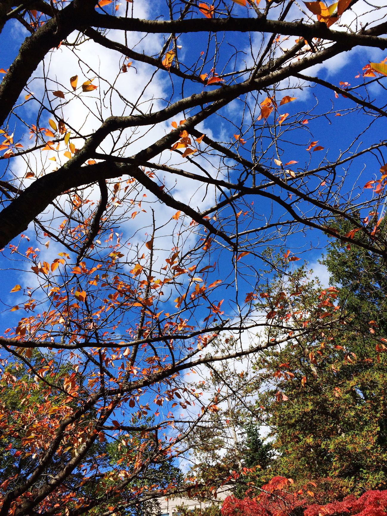 Autumn Leaves Blue Sky Sky