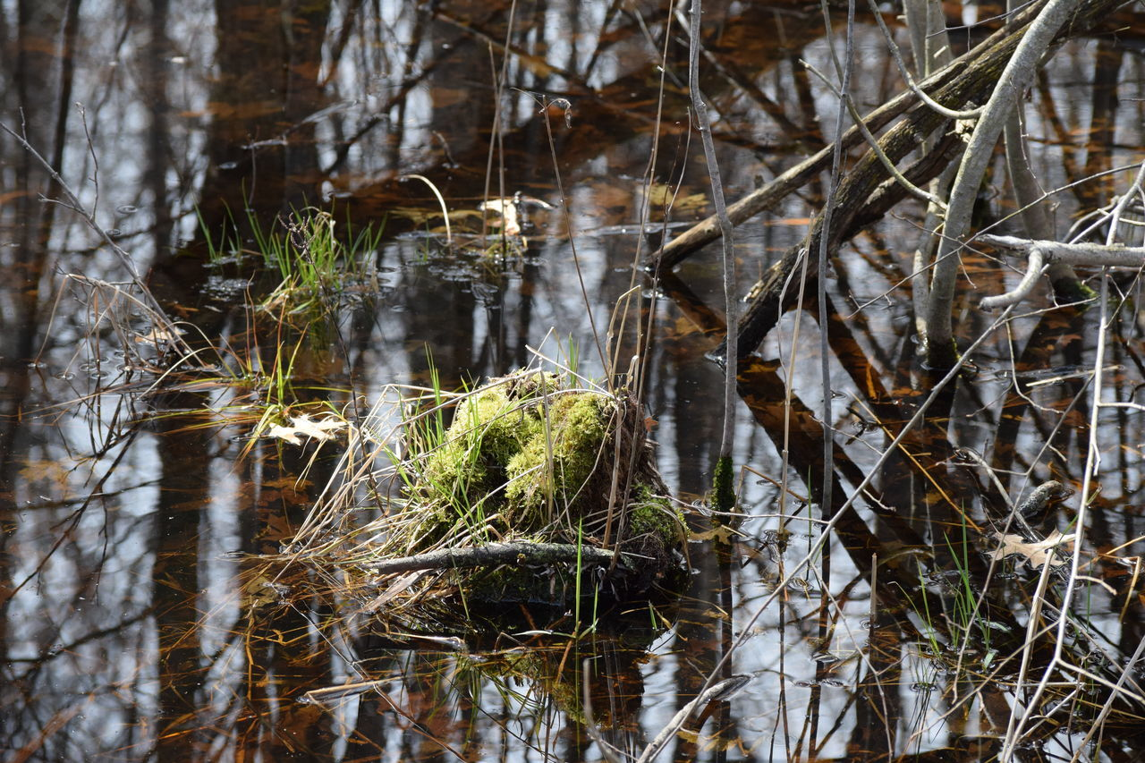 nature, no people, water, growth, day, tranquility, plant, outdoors, beauty in nature, forest, close-up, tree