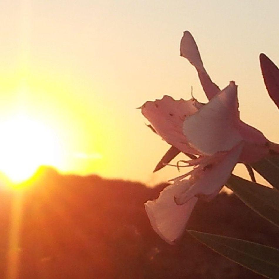 Sunset Zonsondergang Comino Visitcomino sky yellowsky sunshine