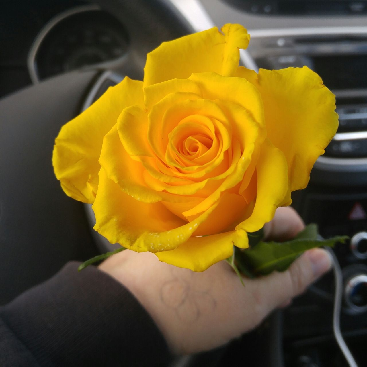 Adapted To The City Random Rose - Flower Yellow Flower Yellow Yellow Rose Gift In Car
