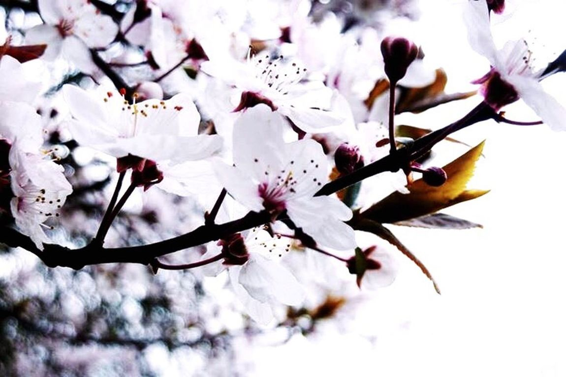 Spring? Where are you? I'm afraid it's too early.. 😪 Spring Spring Flowers Springtime Springmood