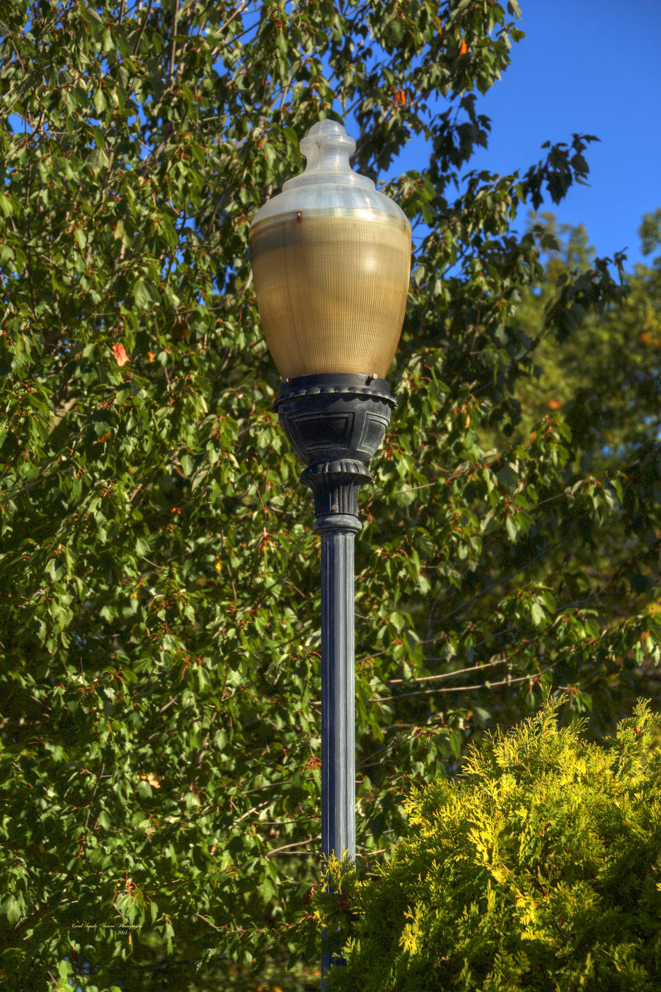 A lovely antique lamp stands outside amidst some trees. The globe is old glass, gold and white. I believe this was, at one time, a gas light. Antique Decoration Electric Lamp Electric Light Focus On Foreground Gas Light Glass Lamp Shade Illuminated Lamp Lamp Post Lantern Lighting Equipment Low Angle View No People Outdoors Possibilities  Protection Safety Simplicity Street Light
