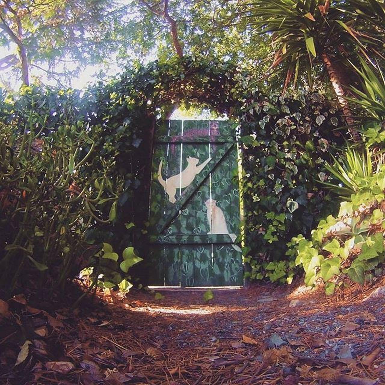 Wonders behind Alice's door. Gopro Robertsonpark Catdoor Wonders wanderlust aliceinwonderland goprofun hero3