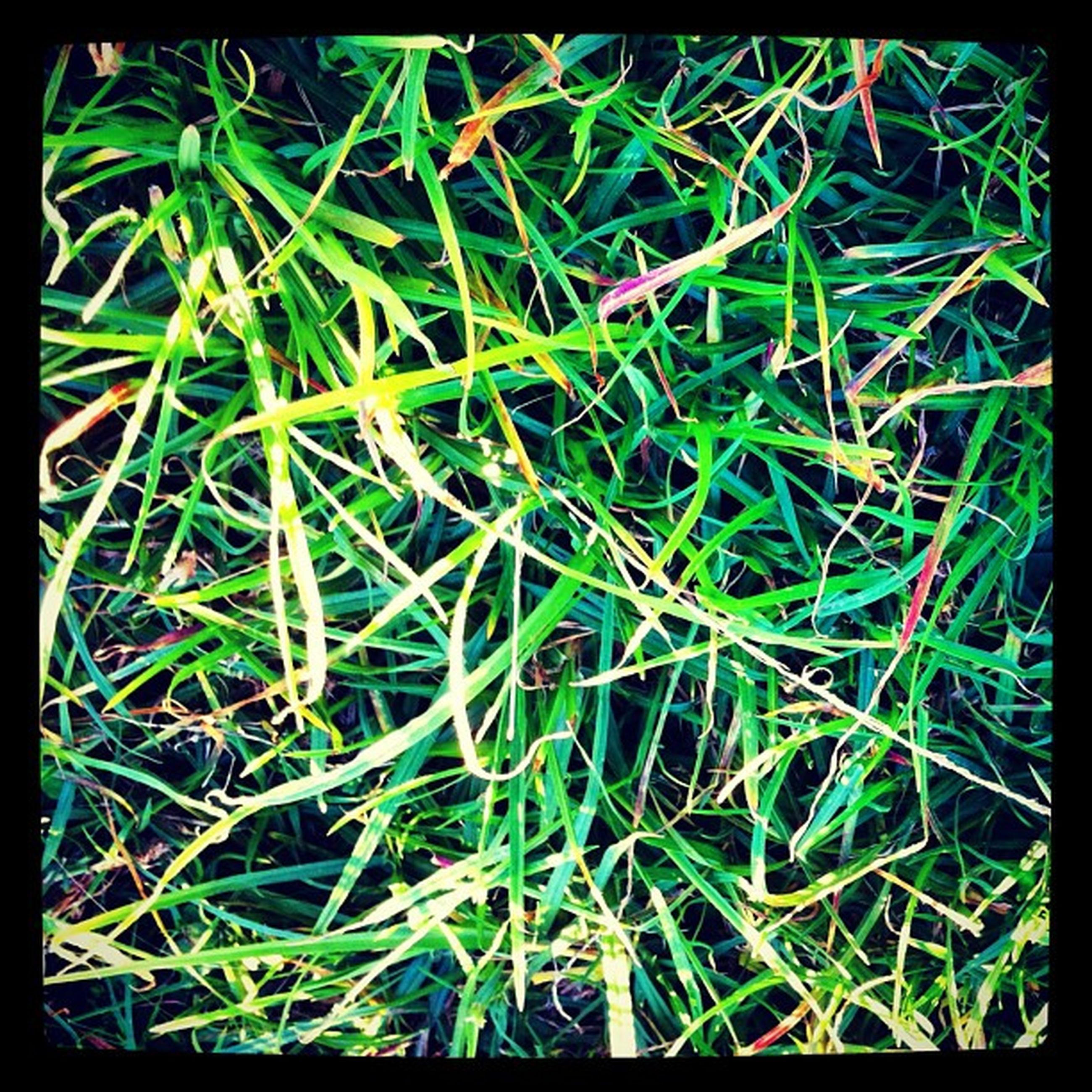 transfer print, auto post production filter, grass, growth, plant, nature, green color, field, close-up, beauty in nature, backgrounds, full frame, outdoors, day, no people, freshness, high angle view, selective focus, leaf, focus on foreground