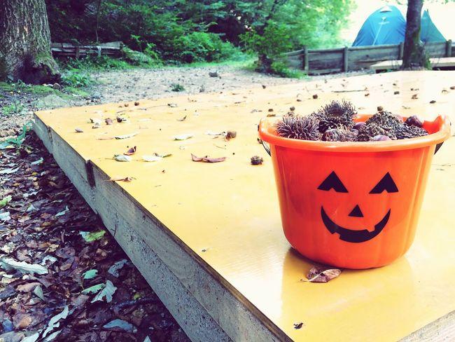 Happy Halloween どんぐり 栗 Autumn