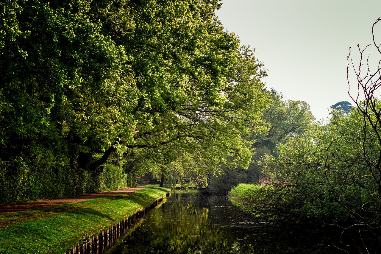 Path By The Canal Day Grass Growth Lush - Description Nature No People Outdoors Tree