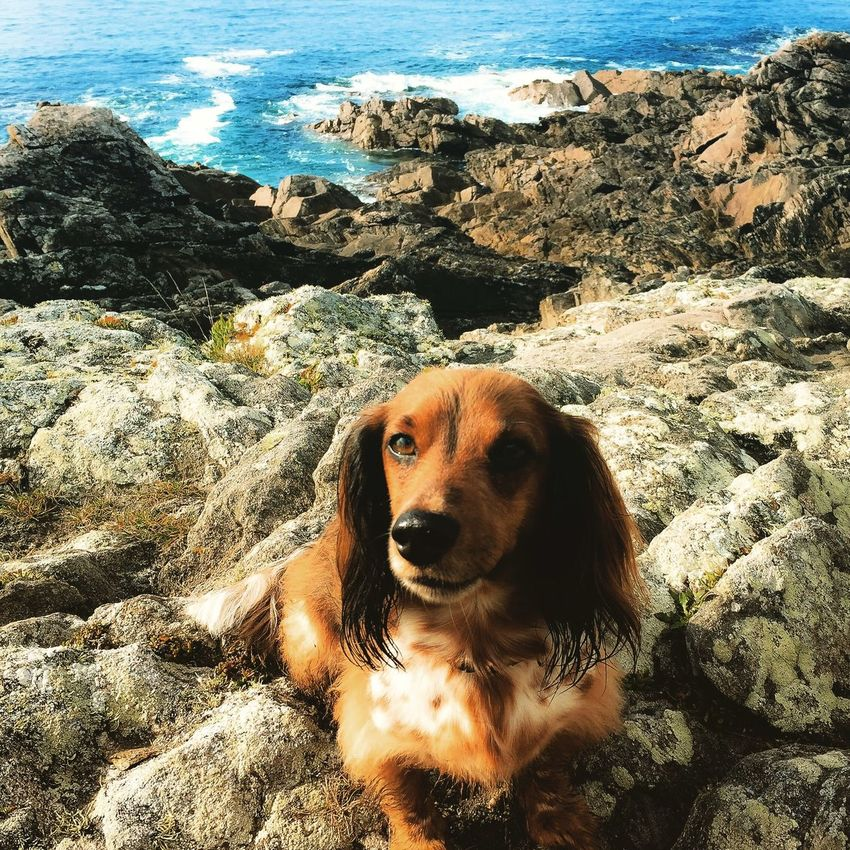Enjoying Life Bretagne Dogs Dachshunds I Love My Dog Teckel Dachshund