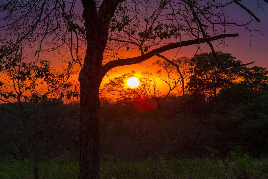 un atardecer de los últimos días del mes de marzo en la ciudad de cañas guanacaste Beauty In Nature Forest Landscape Nature No People Outdoors Sky Sun Sunset Tranquil Scene Tree Tree Trunk