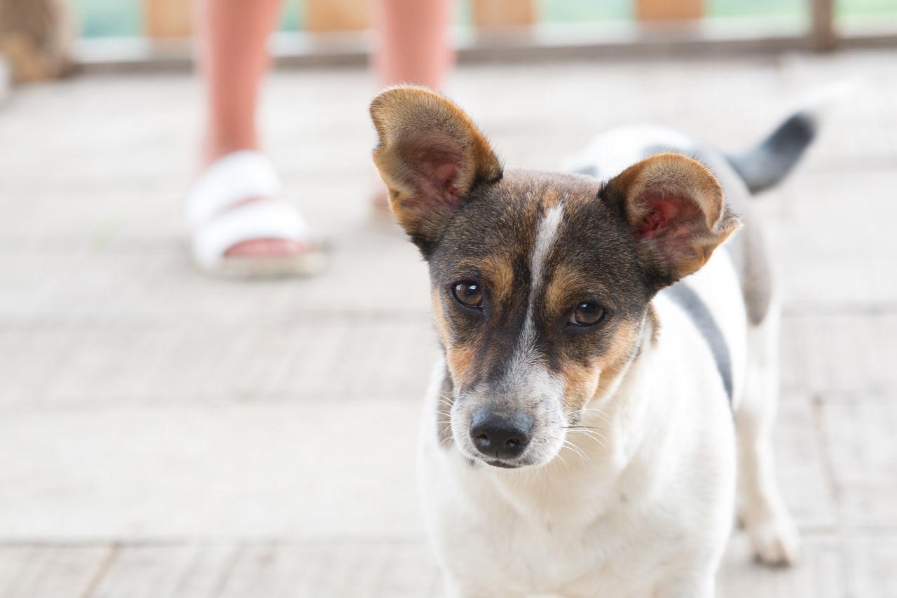 Beautiful stock photos of dogs, Animal Body Part, Animal Head, Animal Themes, Close-Up