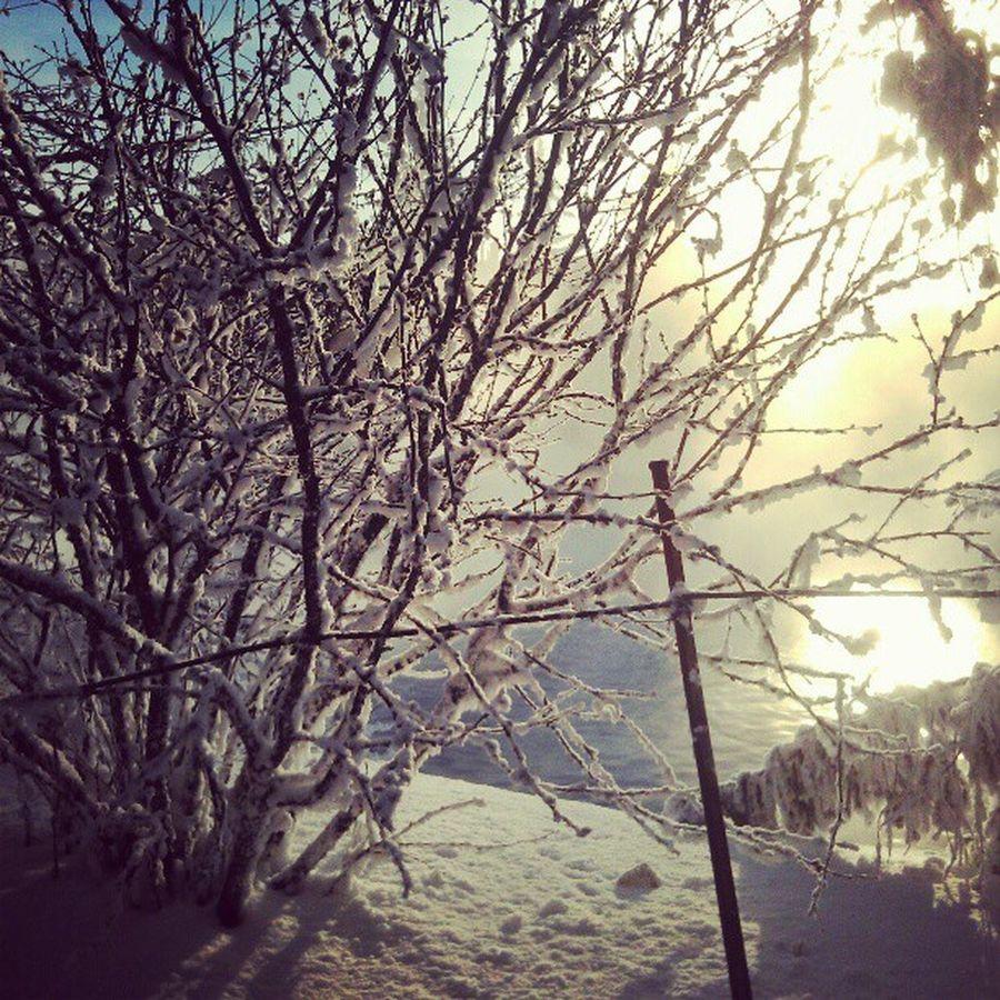 Cold Sun Pond Winter зима