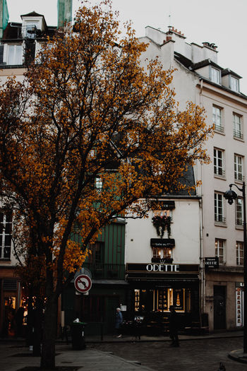 A street in St Michel, Paris Autumn Autumn Colors City Europe Trip Exploring Exterior Travel Travel Photography Architecture Bakery Branch Building Exterior Built Structure Cafe City Day Europe French Odette Old Buildings Outdoors Saint Michel Street Travel Destinations Tree