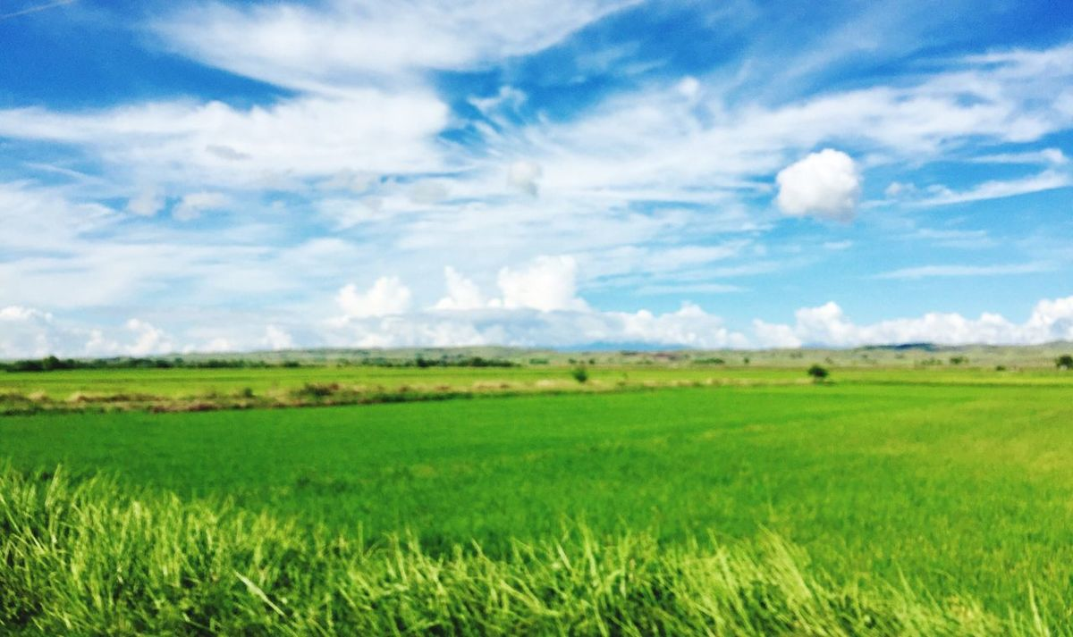 Eyeem Philippines EyeEm Nature Lover Rice Field