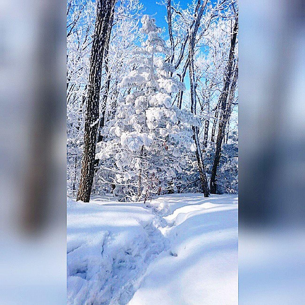ловите_заключительные_моменты_зимней_сказки