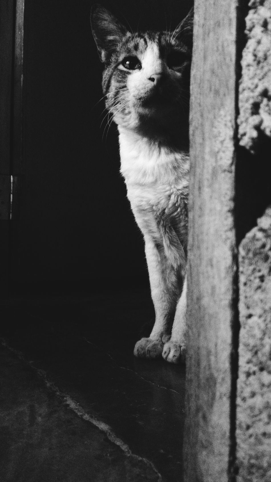 He's been hidding from our dog 🐈🐱 Cutelittlemeow Littlemeow Cat Androidography Beautiful 13mp Cute Blackandwhite Kitty Hidding Animals Pets Meow Claws Amazing Cool Pet Portrait Pets Corner Pet Photography  Photooftheday Beauty