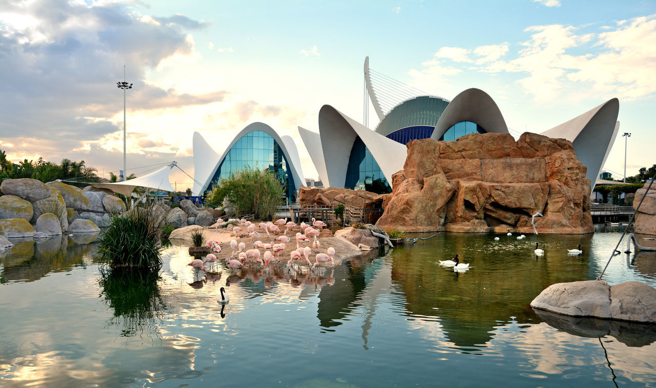 Flamingo pool at Oceanographic center , Valencia , Spain. Amazing Aquarium Architecture Beautiful City City Of Arts And Sciences Of Valencia, Spain Flamingo Landscape Life Modern Nature No People Oceanographic Outdoors Skyscraper SPAIN Sunset Tourism Tourist Attraction  Travel Travel Destinations Vacations València Visiting Water