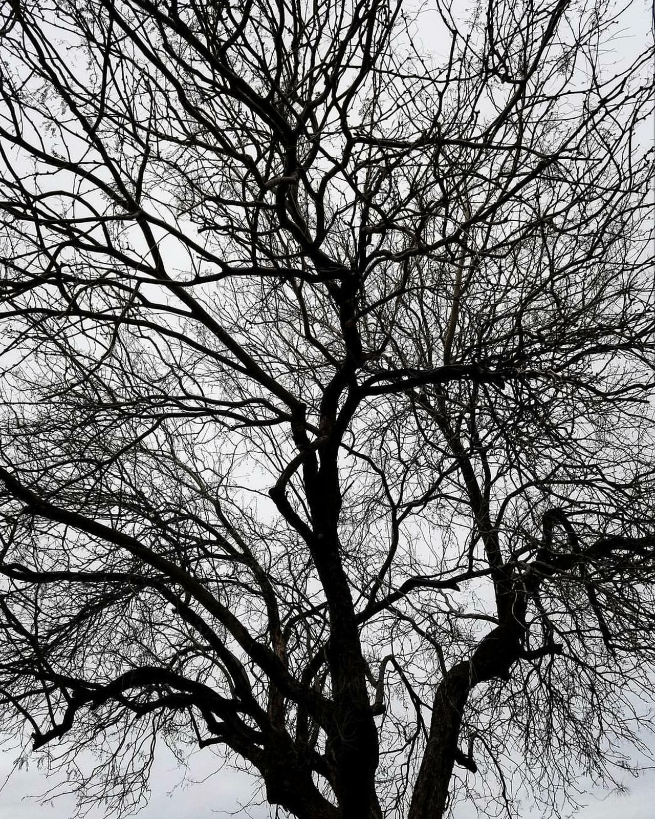 Branch Bare Tree No People Sky Tree Outdoors Nature Beauty Of Nature Premium Collection EyeEm Vision EyeEmBestEdits EyeEm Best Shots BestEyeemShots BestofEyeEm Beauty In Nature