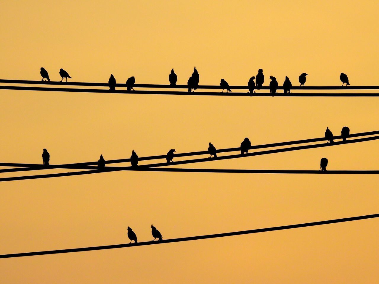 Bird Clear Sky Animals In The Wild Animal Themes Sunset Silhouette Low Angle View Perching Animal Wildlife No People Outdoors Nature Day Sky Birds Birds_collection Animal Animals Animals In The Wild Bird On A Wire Wire Silhouette