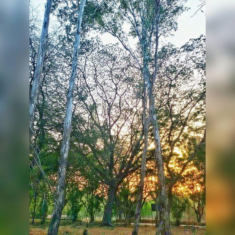 Greenary Eveningslikethese Walk Nationalpark