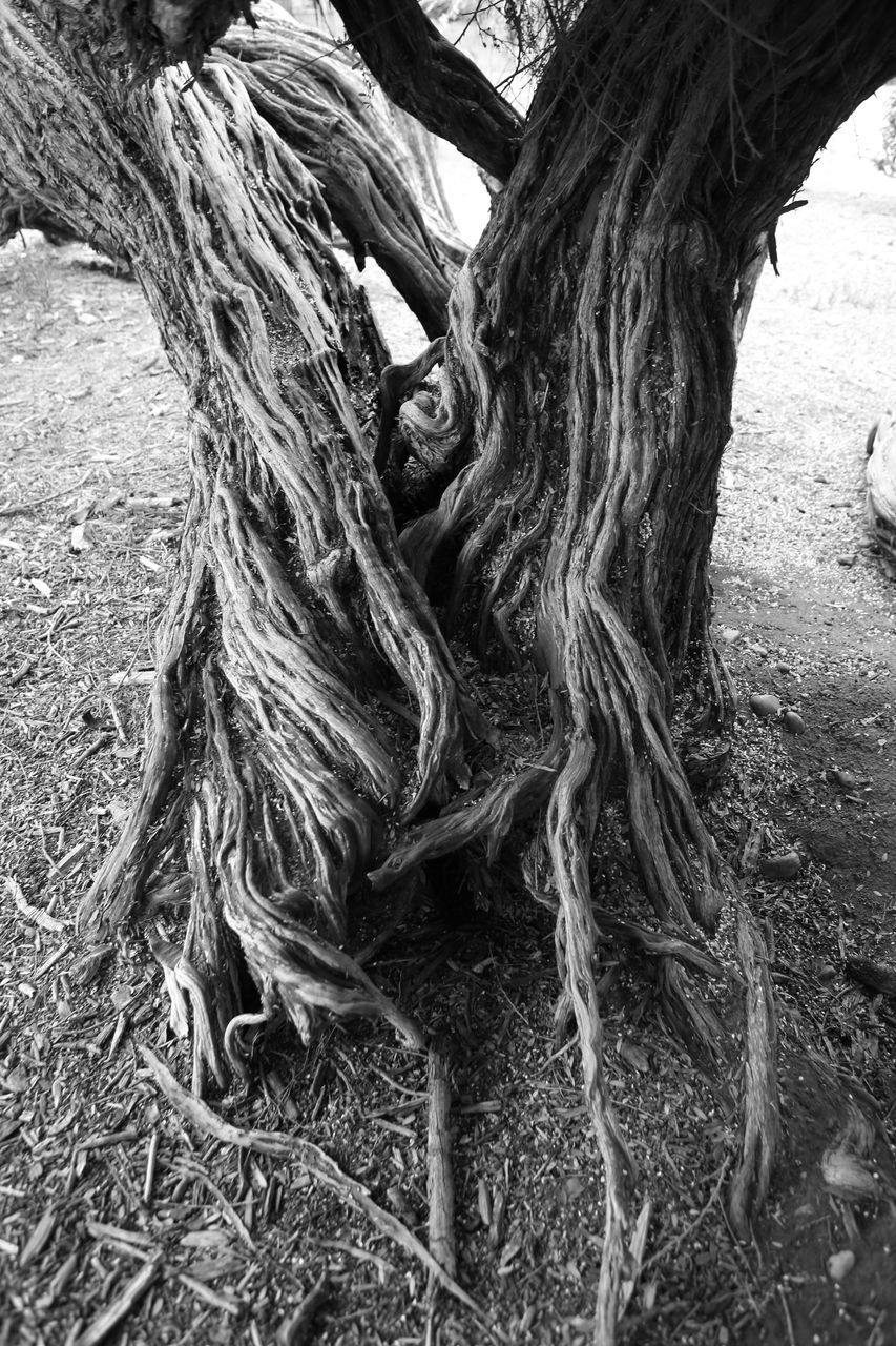 tree trunk, tree, day, root, textured, bark, outdoors, field, growth, no people, nature, rope swing, close-up, dead tree