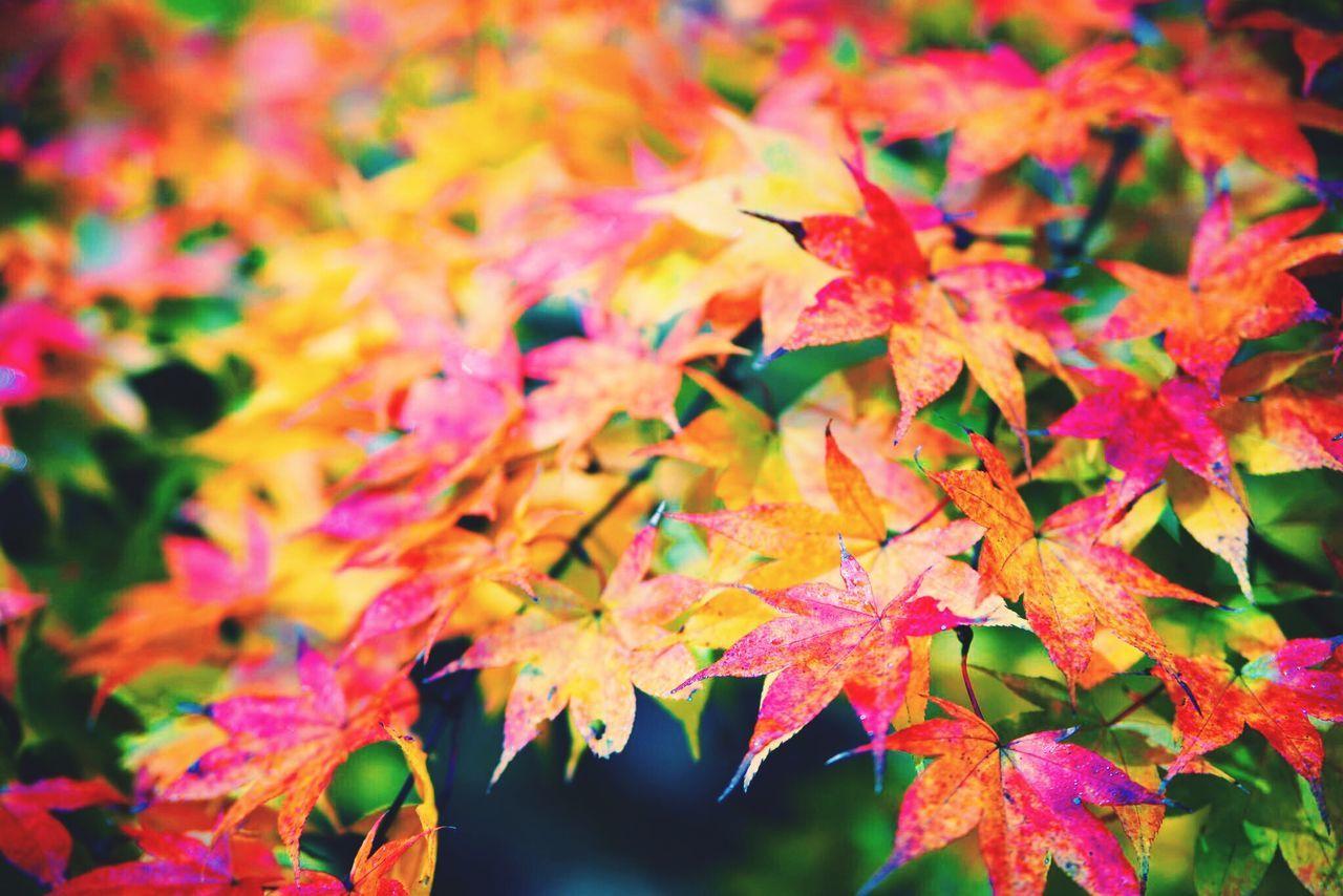 Close-Up Of Vibrant Autumn Tree