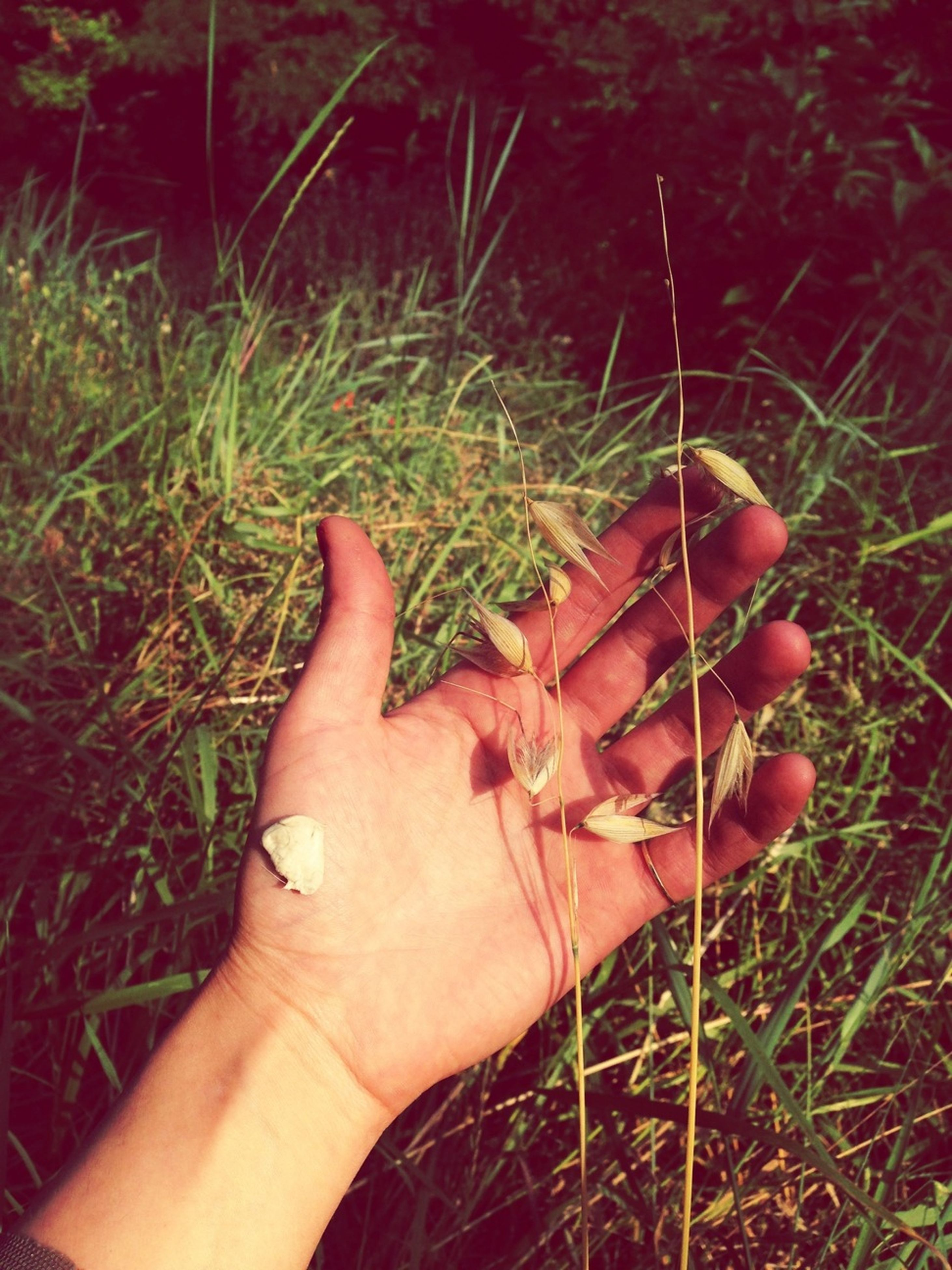 person, personal perspective, part of, holding, human finger, cropped, grass, unrecognizable person, close-up, lifestyles, leisure activity, field, plant, outdoors, focus on foreground, red