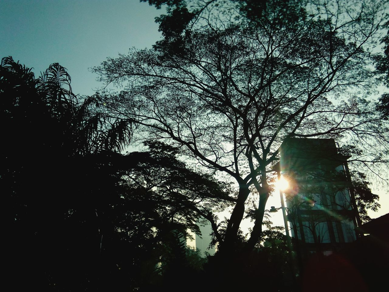 tree, lens flare, sunbeam, sun, sunlight, low angle view, no people, silhouette, nature, growth, branch, outdoors, day, sky, beauty in nature, architecture