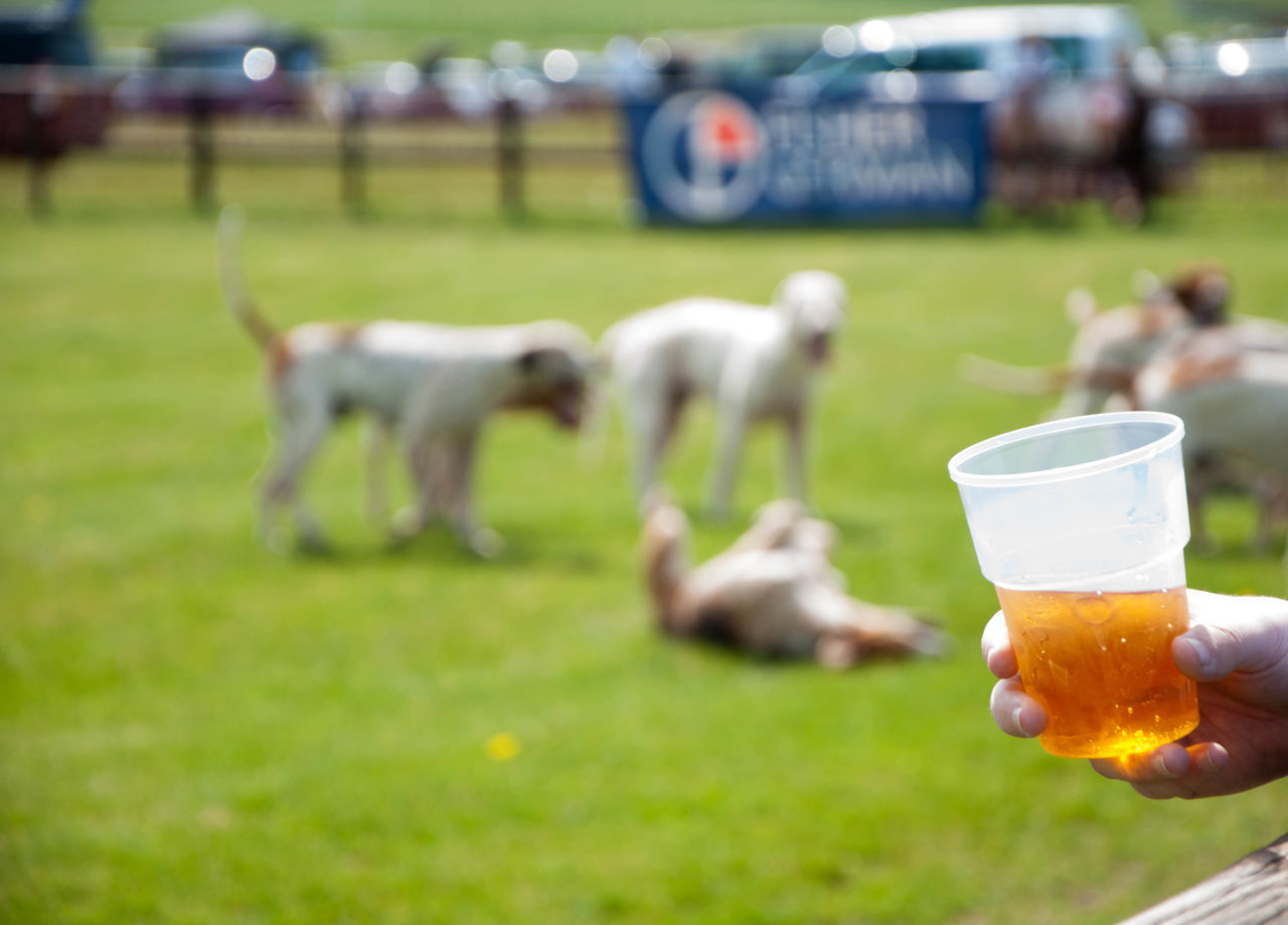 Cropped Image Of Hand Holding Beer Glass With Dogs On Field At Park