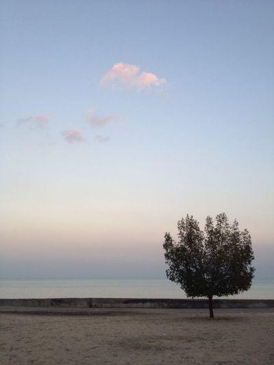 Trees Kuwait Simplicity Frame It!