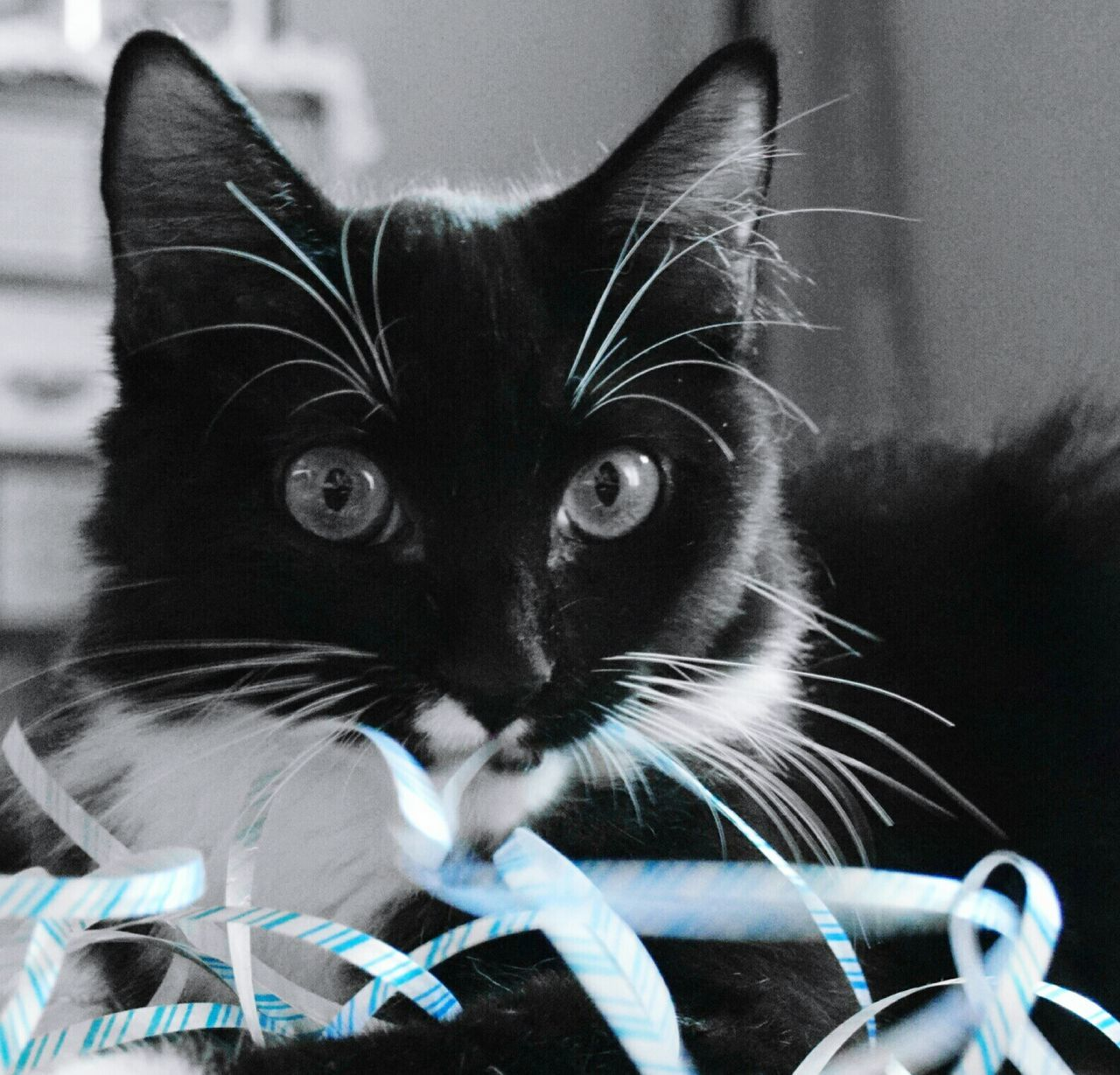 Kittykitty Kitty Time  Whisker Looking At Camera Yellow Eyes Black Color Domestic Animals Pets Domestic Cat Happigramma EyeEm Gallery Gettyimages Thesmallestlittlethings Godsartwork EyeEm Best Shots Everythingisbeautiful Kitty Purrfect Purrfe Iseeinpictures Eyeem This Week Close-up Cats Cats Cats Of EyeEm cats