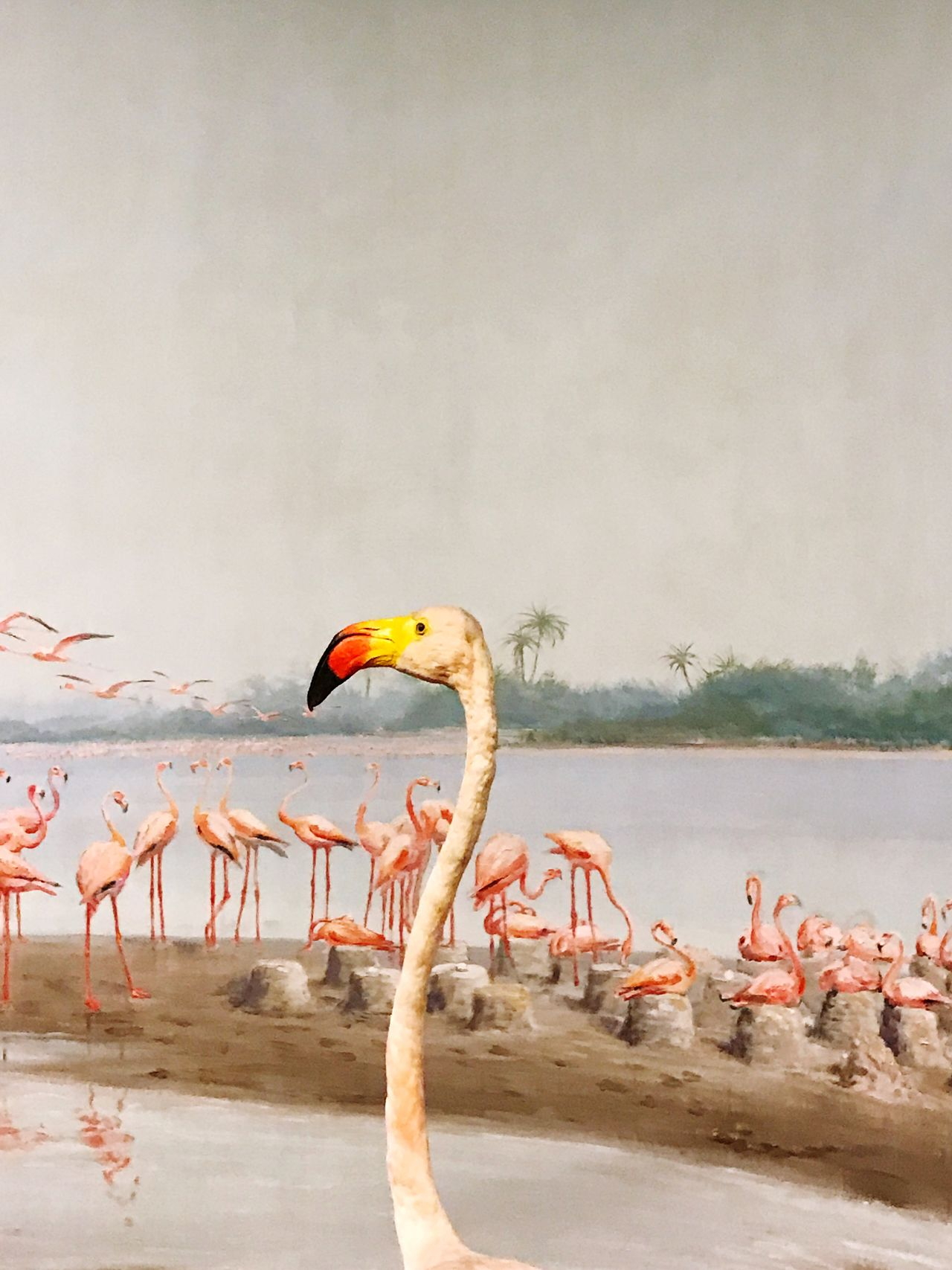 Bird Animals In The Wild Flamingo Animal Themes Animal Wildlife Nature Water No People Beauty In Nature Day Lake Scenics Outdoors Large Group Of Animals Beak Sky