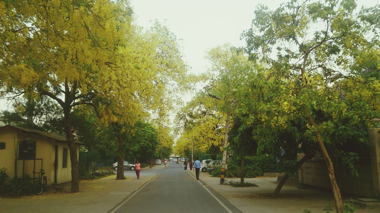 India Tree Nature Eveningwalk Yellow Flowers Beauty In Nature Mesmerized Edited Beauty Of Nature Yellow