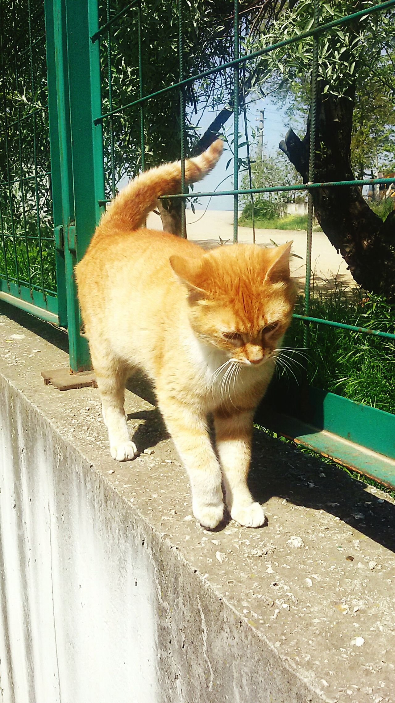 Pets Domestic Animals One Animal Domestic Cat Animal Themes No People Street Cats Cat Photography Turkey Çınarcık
