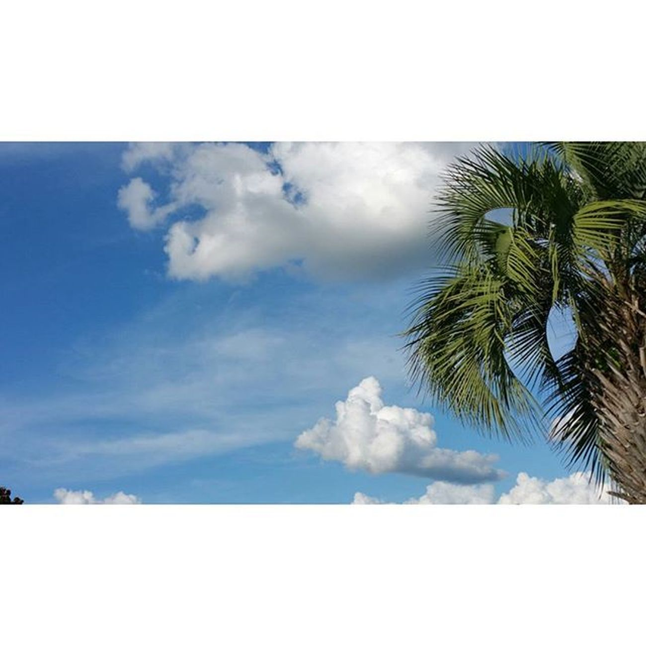 Yesterday. Hotbutbeautifulday Lowndescounty Georgia Southlife Southernliving Home Clouds Blue Beautiful Sky Palmtree Iloveclouds Palmtreephotobomb 😜 Thisskyiskillingme Iloveit Jw Jehovah Ourgrandcreator Jehovahscreation Jwlife Jwlady Visualsjw Jwphotography Igsky Naturelover natureshot amazing_skyshotz samsung galaxynote4 ❤