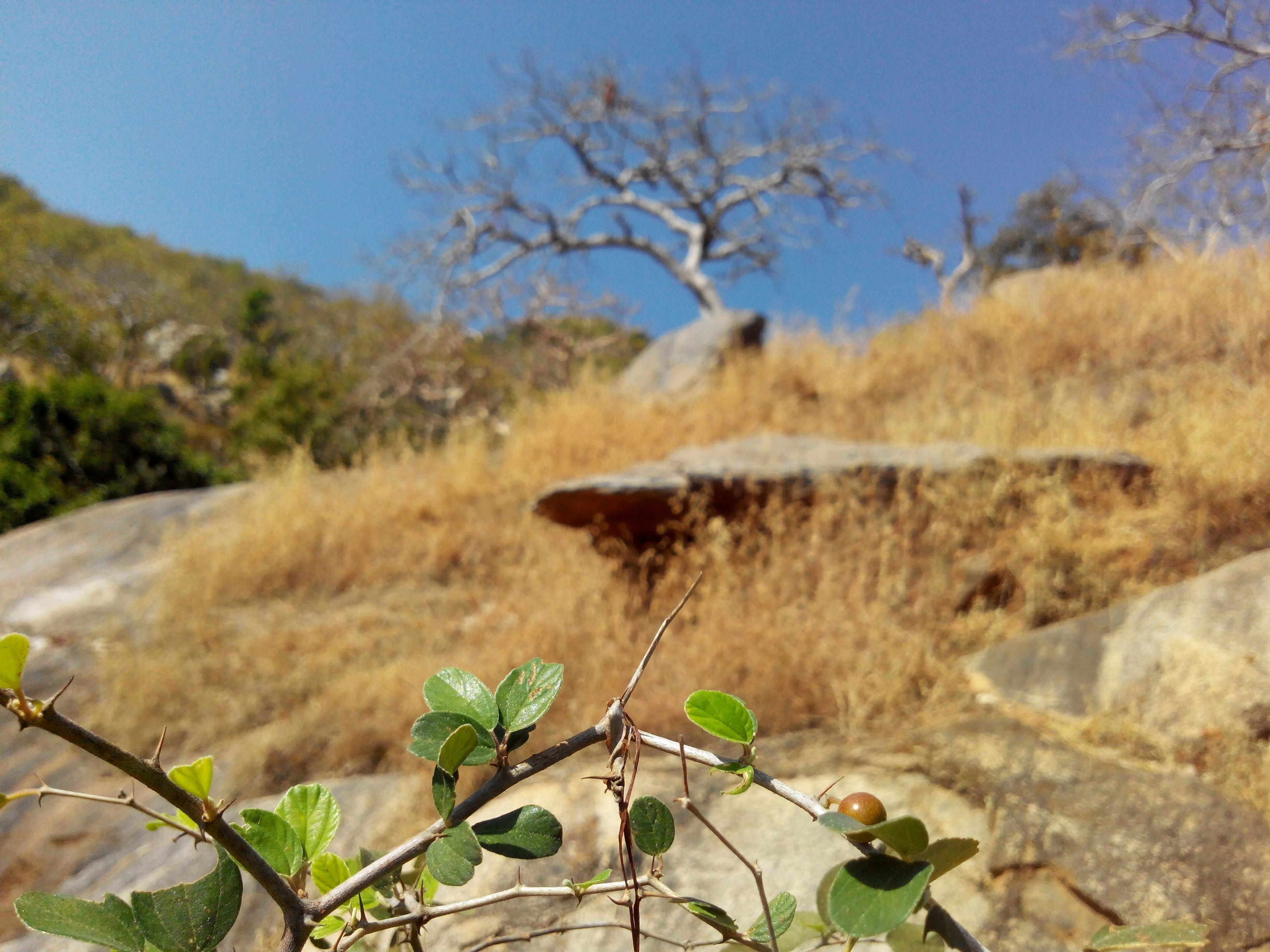 nature, tranquility, branch, plant, tranquil scene, tree, beauty in nature, clear sky, mountain, growth, scenics, focus on foreground, rock - object, landscape, day, outdoors, non-urban scene, close-up, no people, leaf