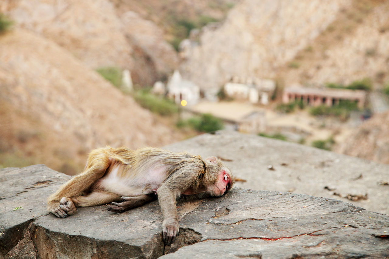 Beautiful stock photos of monkey,  Animal Themes,  At The Edge Of,  Carefree,  Cliff