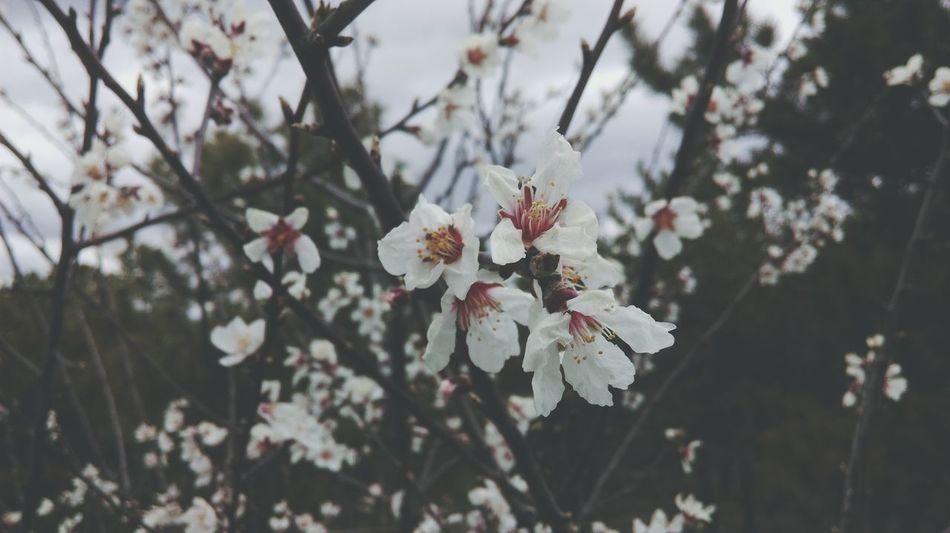 Beautiful stock photos of ankara, Ankara, Beauty In Nature, Blooming, Close-Up