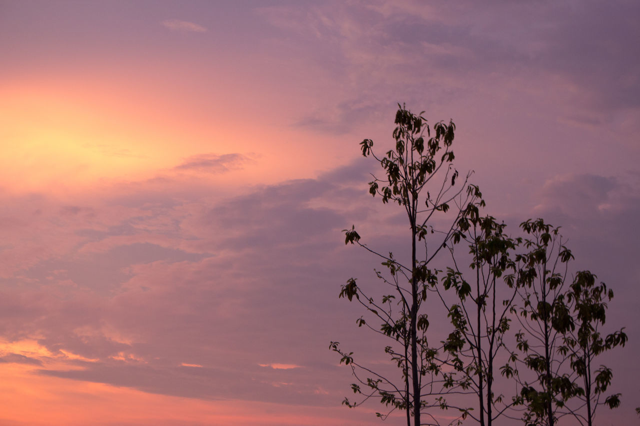 Low Angle View Of Trees Against Pink Sky At Sunset